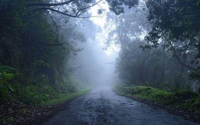 kodaikanal forest tour package